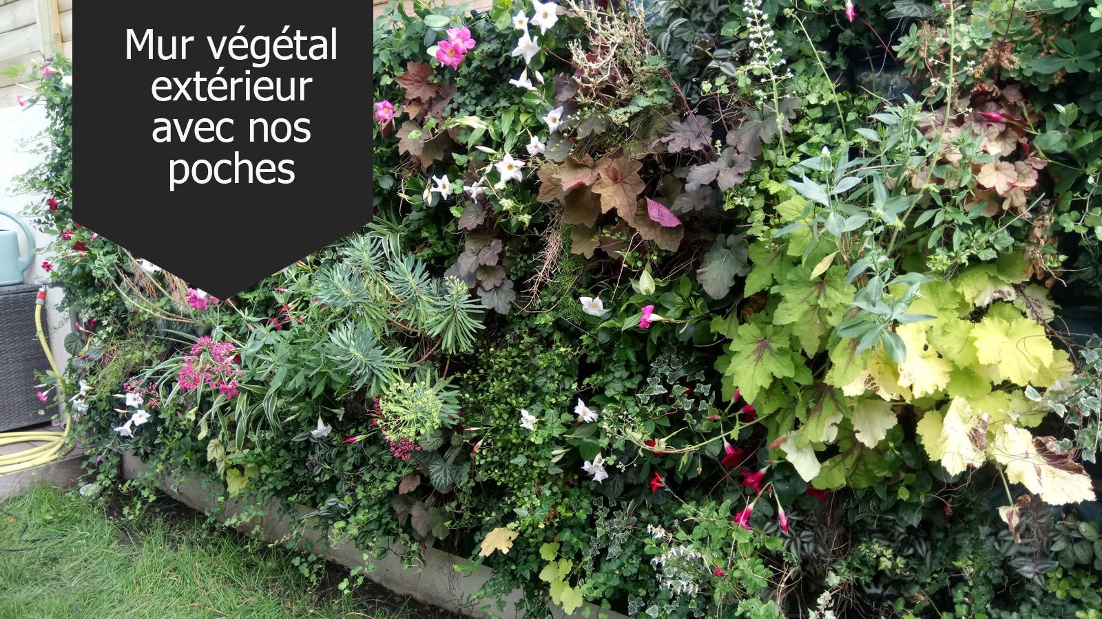 Plantes Pour Mur Végétal Extérieur mur végétal vivant, tableau vegetal, murs végétaux interieur
